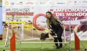 campeonato-agility-zaragoza-2016