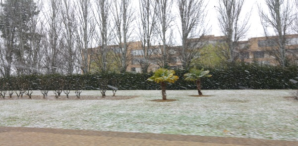 nevando-floresta-zaragoza